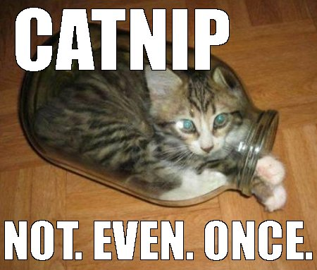 catnip not even once online casino real money funny cat meme