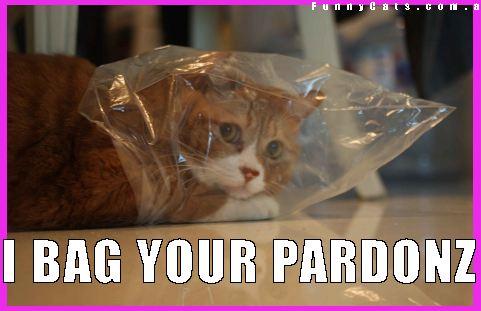 cat bag casino fun