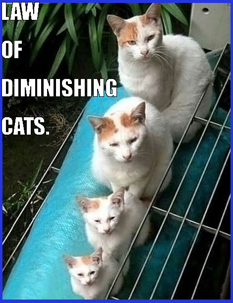 law of diminishing cat returns for online casino players
