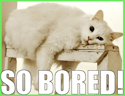 cat is bored online casino funny meow