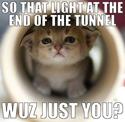 cat at the end of the tunnel meme for online casino real money page