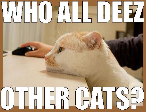 deez cats online casino meows